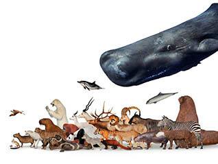 大哺乳類展2ーみんなの生き残り作戦
