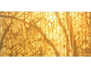 夏のアート・コレクション 不思議の森美術館