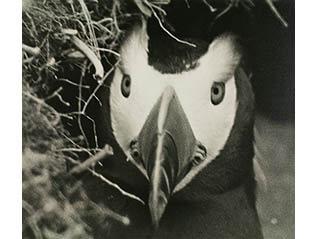FUJIFILM SQUARE 写真歴史博物館 企画写真展「100年前にカワセミを撮った男・下村兼史 -日本最初の野鳥生態写真家-」