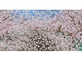 Sato Sakura 桜百景展