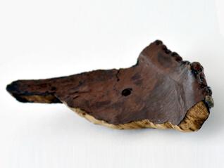 特別公開「重要文化財 鳥浜貝塚の縄文漆器」