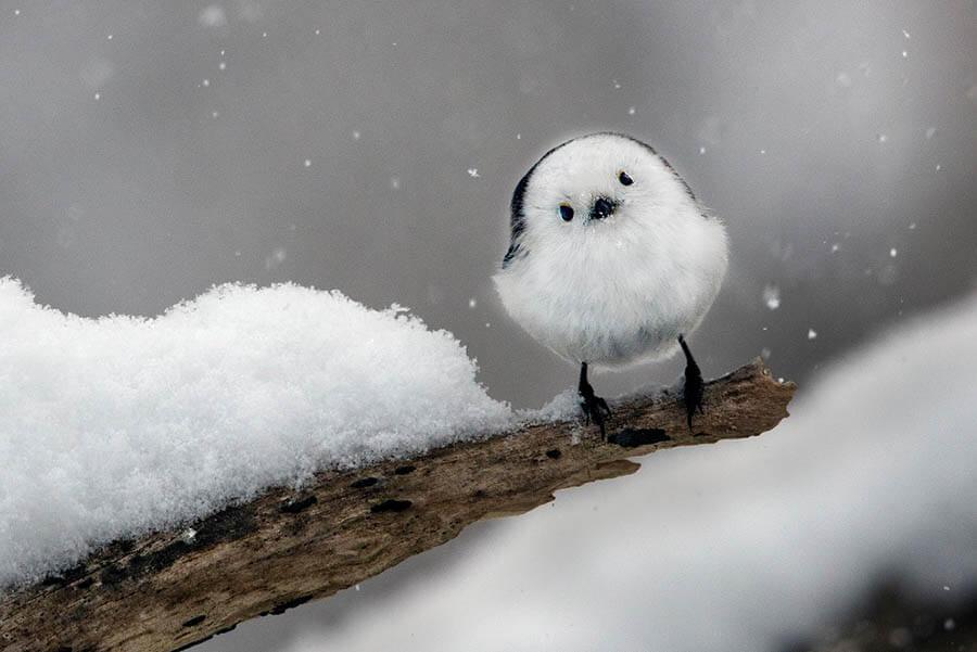 嶋田 忠 野生の瞬間 華麗なる鳥の世界 | 東京都写真美術館 | 美術館 ...