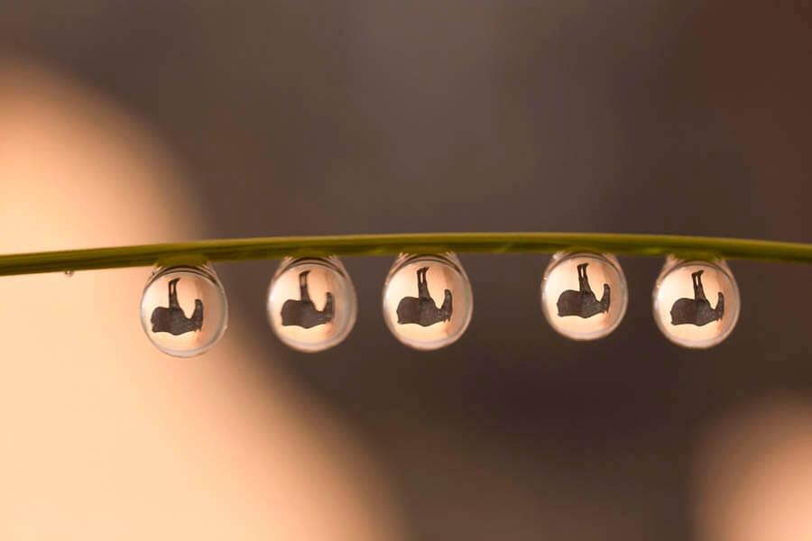 神田日勝×浅井美紀しずく写真「しずくの中の神田日勝」 神田日勝記念美術館-2