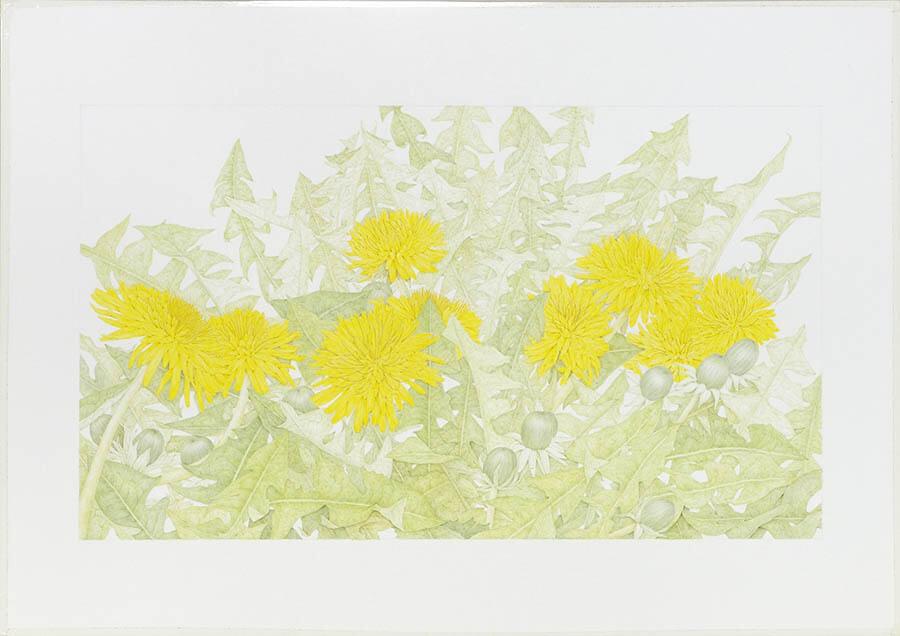 ブラティスラヴァ世界絵本原画展―BIBで出会う絵本のいま うらわ美術館-2