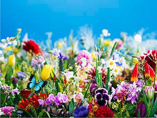 蜷川実花展―虚構と現実の間に―