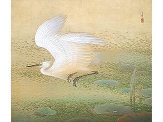 春季特別展 「没後45年 榊原紫峰 知られざる花鳥画家の生涯 国展の仲間たちとともに」