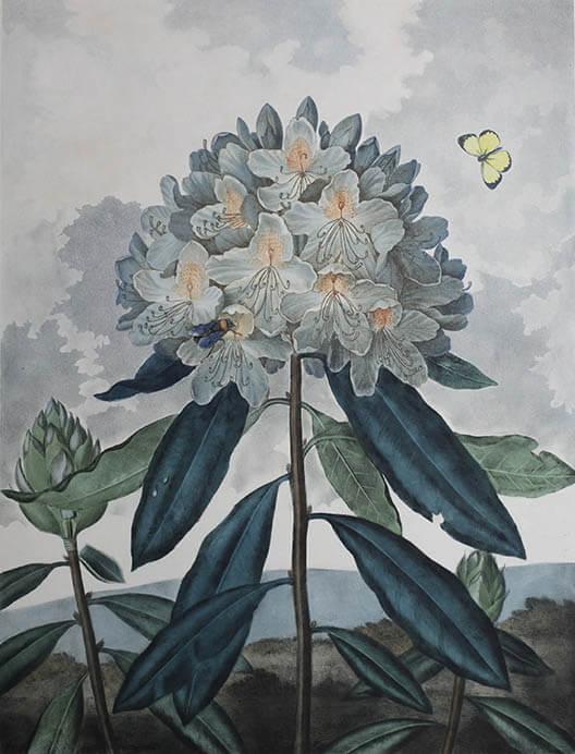 キューガーデン 英国王室が愛した花々 シャーロット王妃とボタニカルアート 東京都庭園美術館-9
