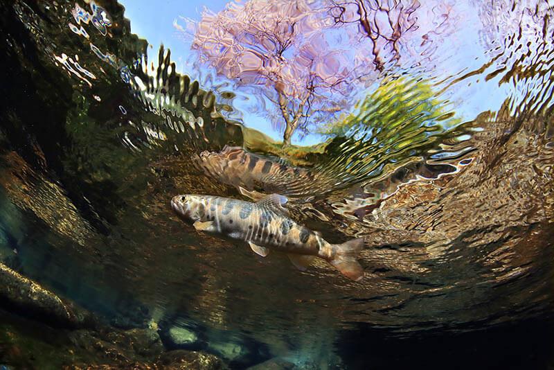企画展 「水と魚、魅惑の世界展」知来要+村上康成 神田日勝記念美術館-3