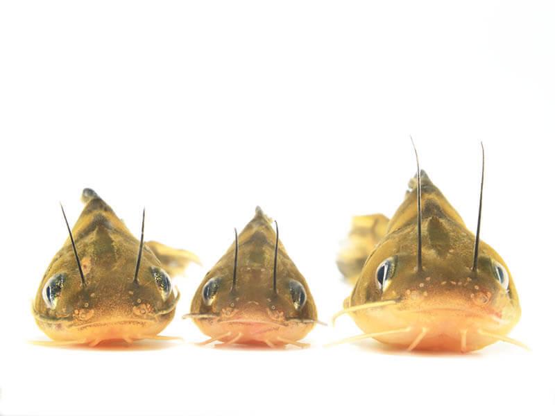 企画展 「水と魚、魅惑の世界展」知来要+村上康成 神田日勝記念美術館-4