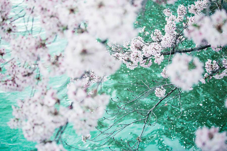蜷川実花展 ー虚構と現実の間にー MIKA NINAGAWA ーINTO FICTION / REALITY 上野の森美術館-5