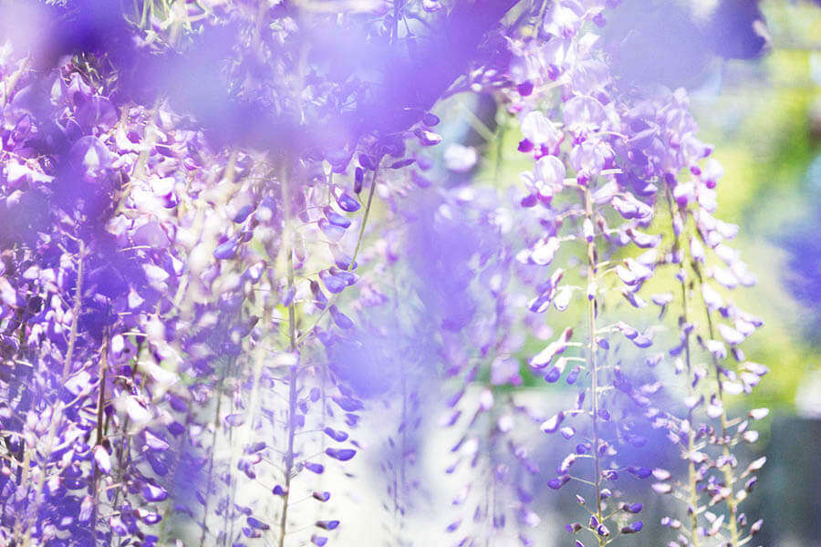 蜷川実花展 ー虚構と現実の間にー MIKA NINAGAWA ーINTO FICTION / REALITY 上野の森美術館-9
